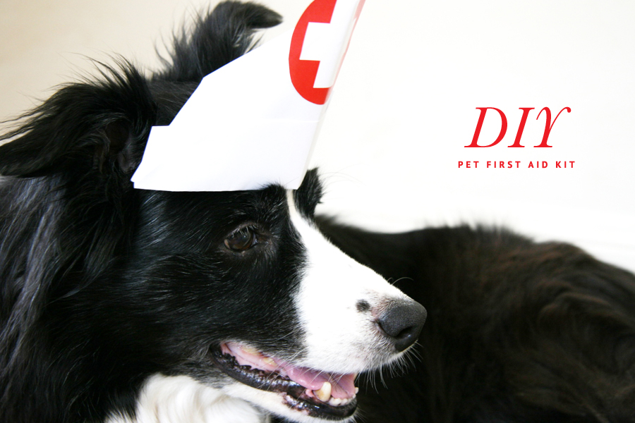 Dog First Aid Kit | Pretty Fluffy