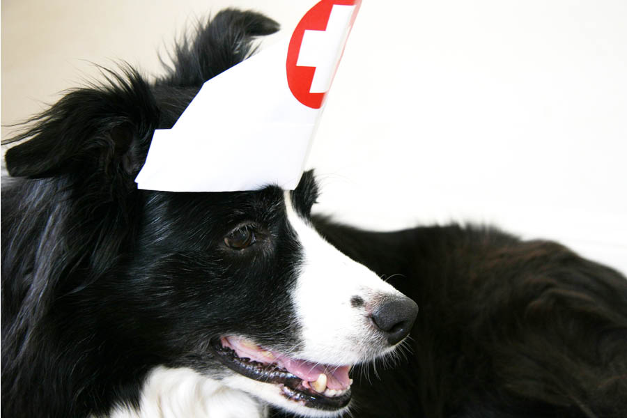 Pet First Aid | Pretty Fluffy