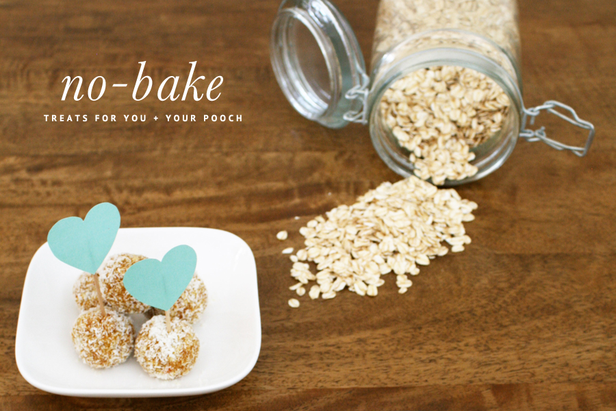 No bake treats recipes for you and your dog | Pretty Fluffy