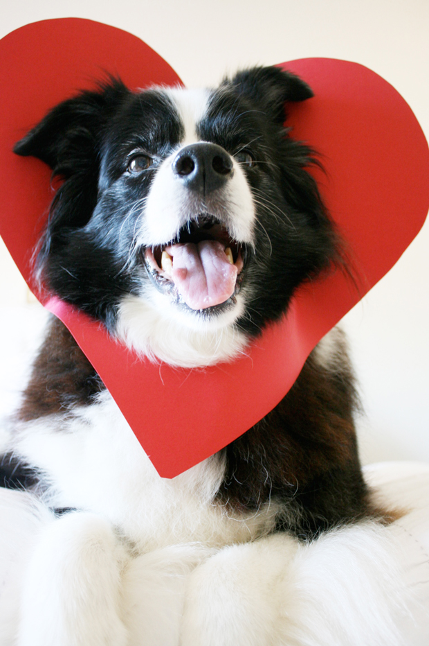 Make the CUTEST Valentine this year - all you need is a your favourite dog and some cardboard to make a dog valentine in less than 5 minutes!