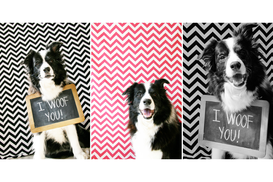 5 Fun and Easy Home Pet Photography Ideas | Pretty Fluffy