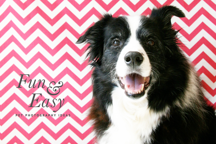 5 Home Pet Photography Ideas | Pretty Fluffy