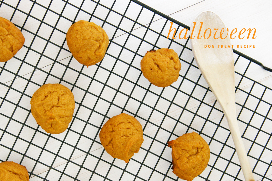 DIY Halloween Dog Treat Recipe | Pretty Fluffy