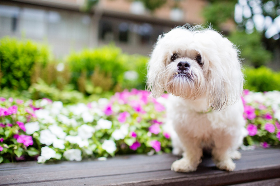 Lucy the Rescue by Dana Cubbage Photography | Pretty Fluffy