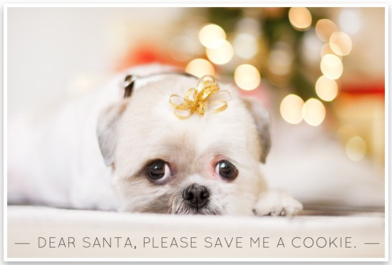 dog holiday cards, puppy eyes