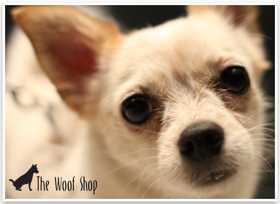 The Woof Shop | Pretty Fluffy Sponsor