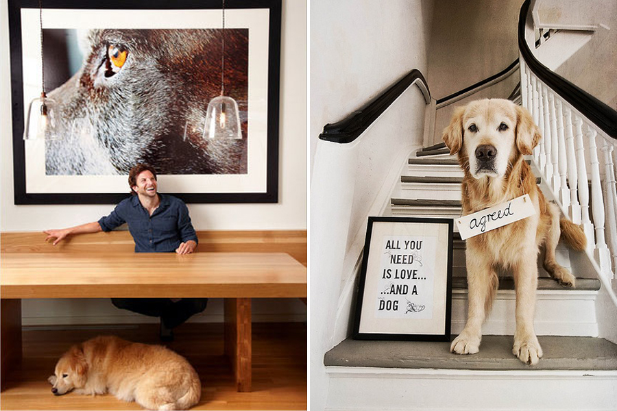Artwork - The Perfect Pet Friendly Home | Pretty Fluffy