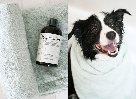 Dog Tails Clarifying Shampoo Review | Pretty Fluffy