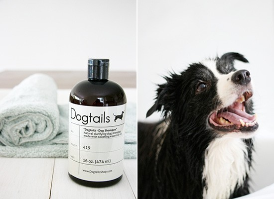Dog Tails Dog Shampoo + Plush Microfiber Towel | Pretty Fluffy