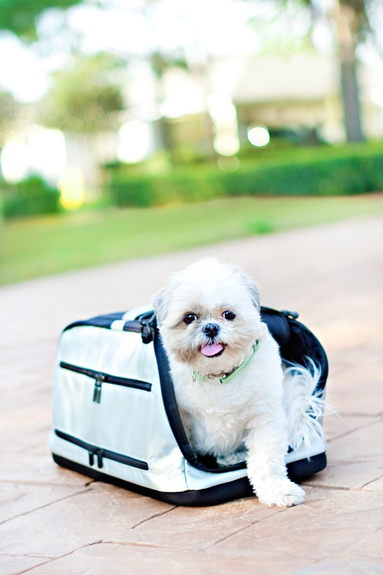Pet-Travel-Carrier-_-Pretty-Fluffy