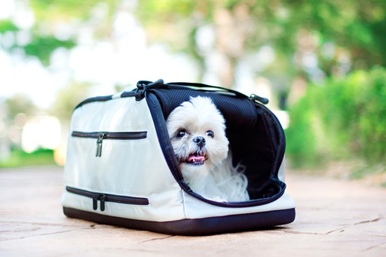 Sleepypod-Dog-Carrier-_-Pretty-Fluffy