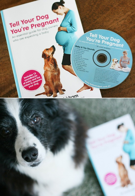 Tell Your Dog You're Pregnant Book Review | Pretty Fluffy