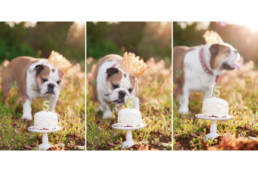 Dog Birthday Cake Smash by Missy Moo Studio | Pretty Fluffy