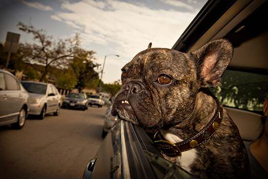 Dogs in Cars by Greg Cohen Photography | Pretty Fluffy