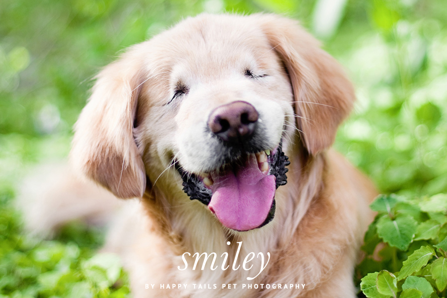 Smiley by Happy Tails Pet Photography | Pretty Fluffy