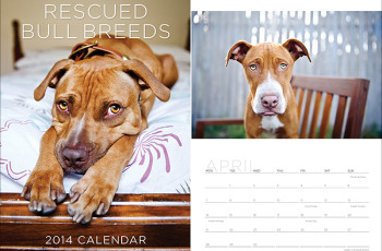 Rescued Bull Breeds by Ruthless Photos 2013 Calendar | Pretty Fluffy