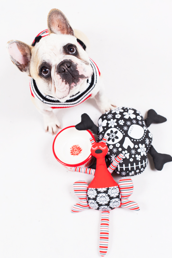 WIN a DOGUE Dog Gift Pack > Enter the Pretty Fluffy Christmas Giveaway - over $2000 in prizes to be won.