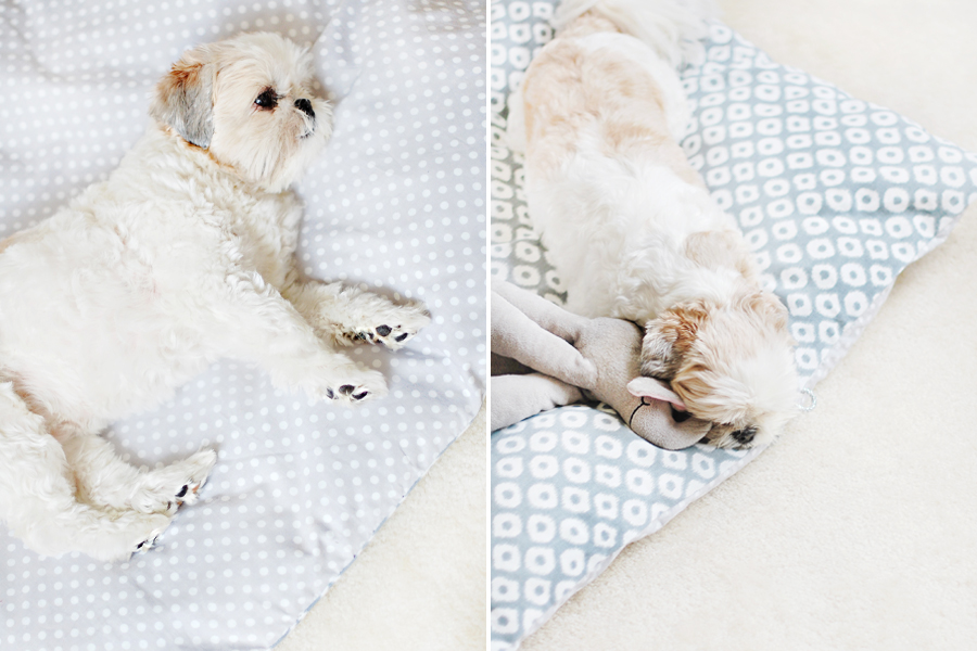 DIY: No Sew Pet Bed