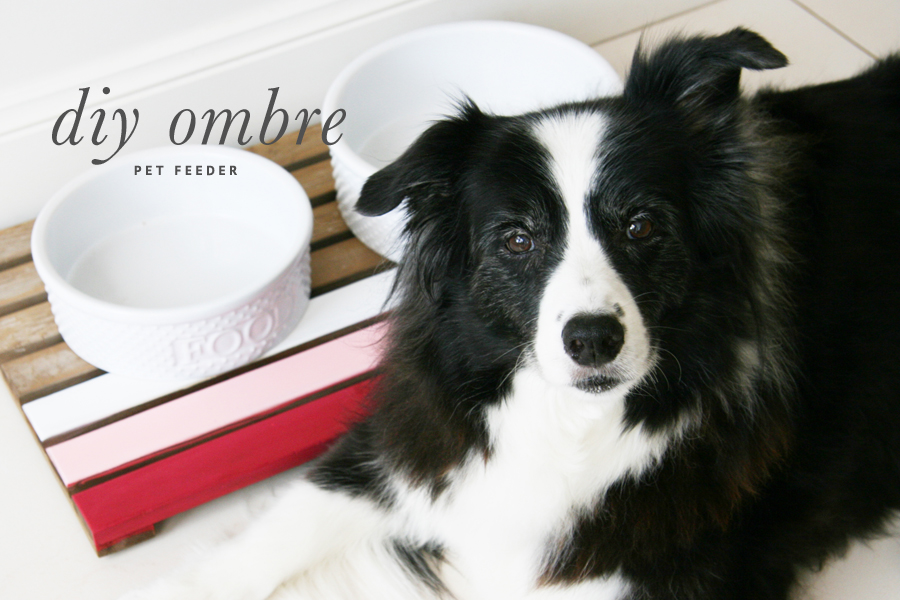 Ombre DIY Dog Feeder | Upcycled Pet Food Mat | Pretty Fluffy