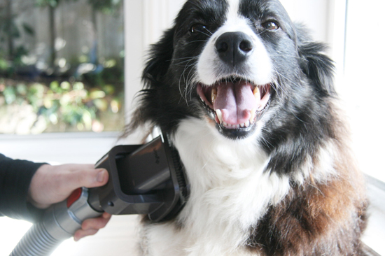 11 Cleaning Tips Every Dog Owner Must Know