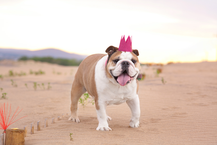 DIY Dog Birthday Crown | Pretty Fluffy
