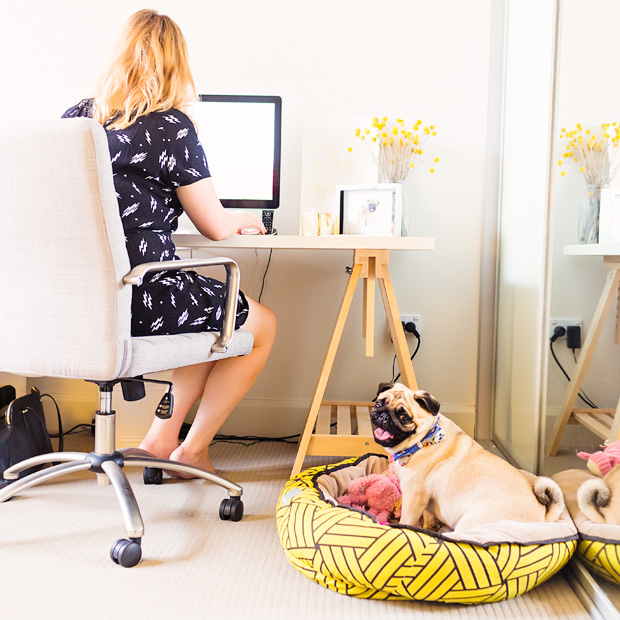 Pet Friendly Home Tips & Tour - Madeleine Burke of The Daily Mark | Pretty Fluffy