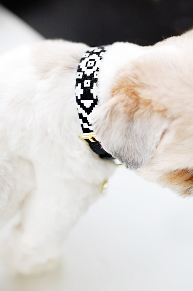 Easy_Dog-Collar-Sleeve-DIY