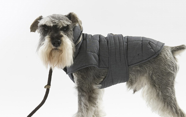 Best Dog Coats Reviews Australia