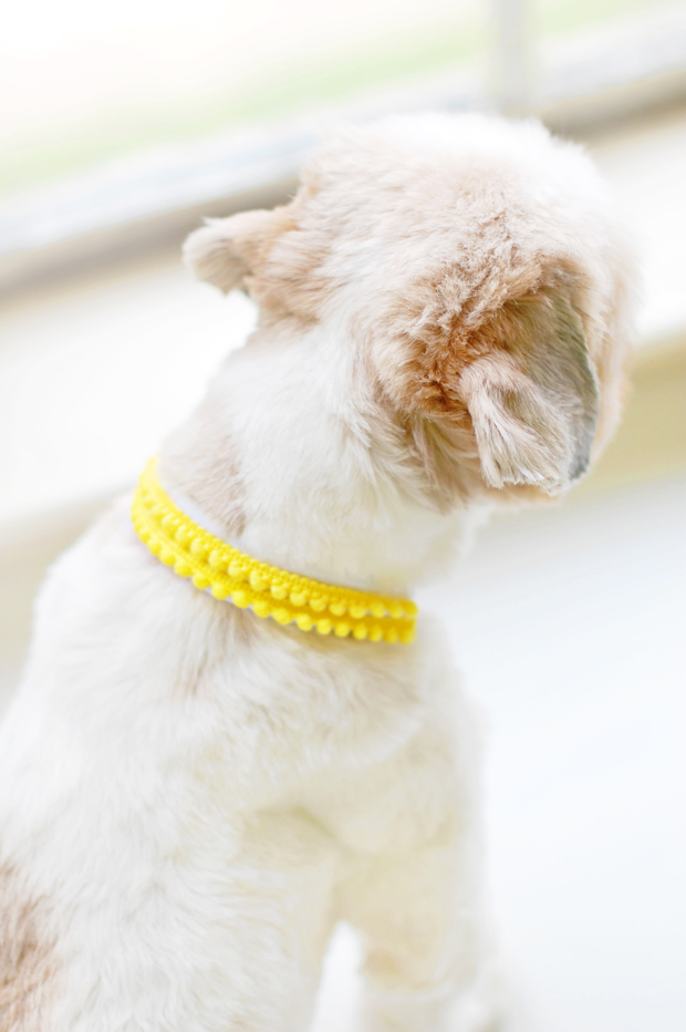 Yellow-Pom-Pom-Dog-Collar-Sleeve