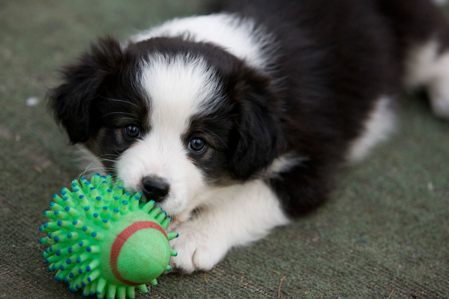 Puppy training tips chewing