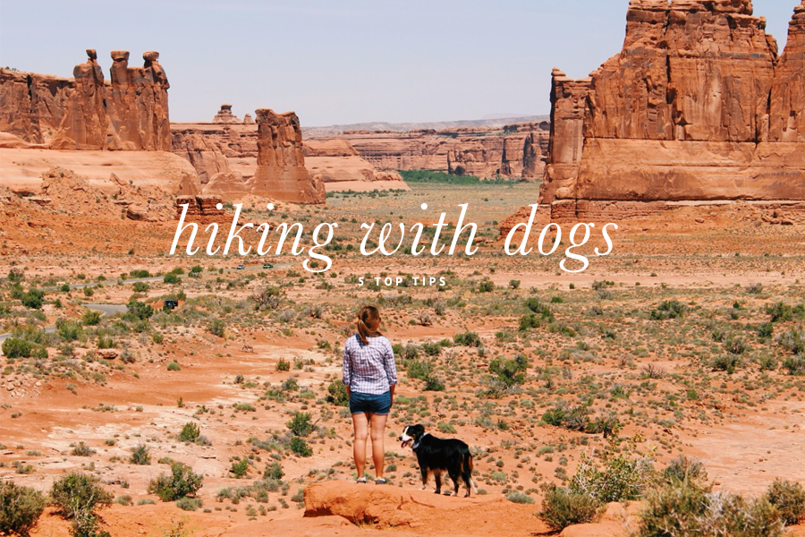 5 Tips for Hiking with Dogs