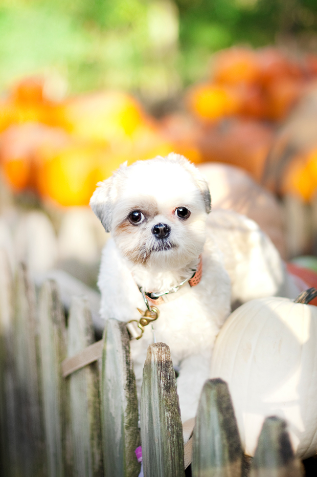 Cocos-at-the-Pumpkin-Patch