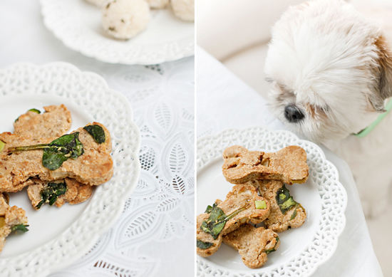 Pretty fluffy 15 homemade healthy dog treat recipes your dog will love forumfinder Choice Image