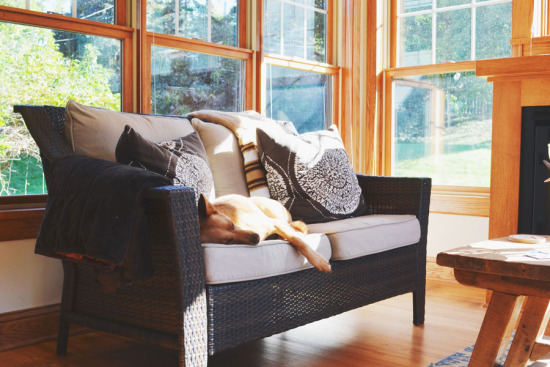 5 Life Lessons to Learn From Your Dog   www.prettyfluffy.com