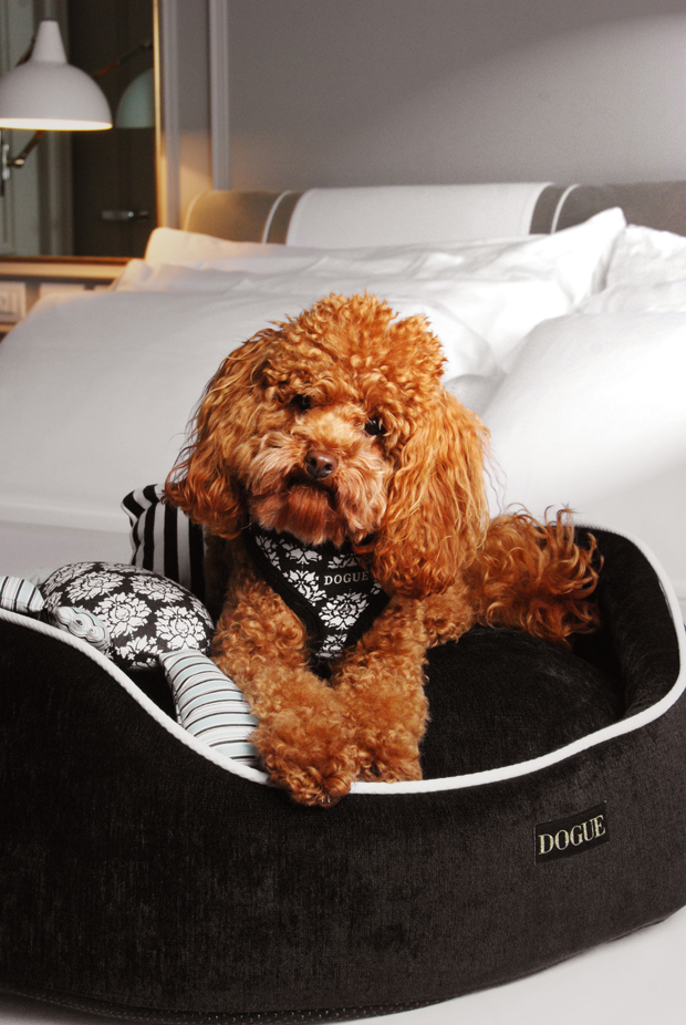 Behind the Brand: DOGUE | A sneak peek behind the scenes with pet brand, DOGUE and how they become one of Australia's most stylish dog brands.