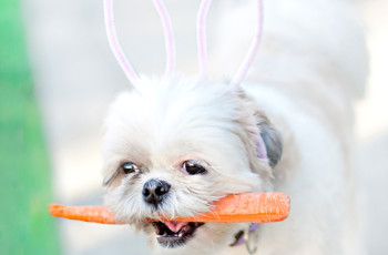 DIY-Cocos-Easter-Bunny-Ears