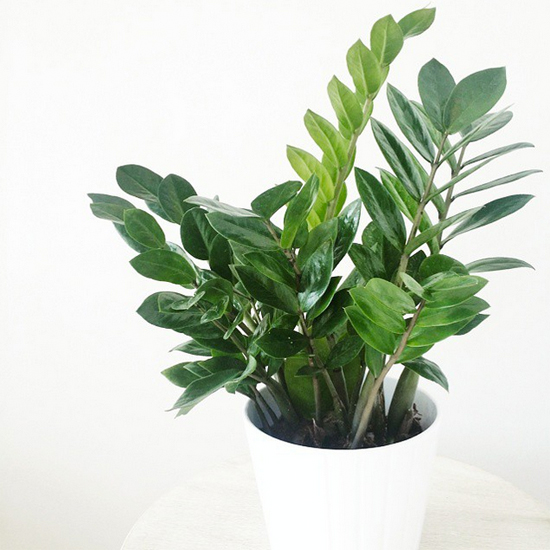 Poisonous houseplants pictures to pin on pinterest thepinsta Houseplants not toxic to cats