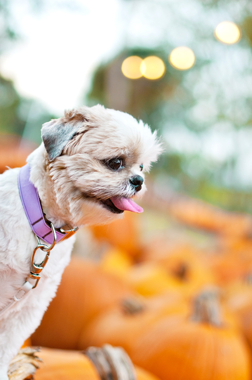 Halloween can be fun but also frightful for our pets. Keep your dog safe and happy this halloween with these 5 simple tips!
