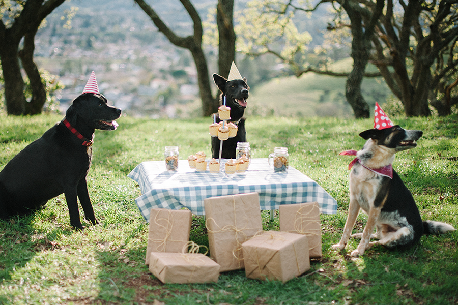 10 Tips for Themed Pet Photoshoot