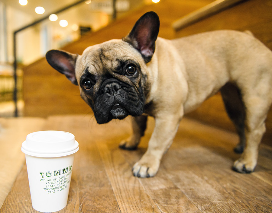 Dogs + Coffee by Chantal Levesque Photo