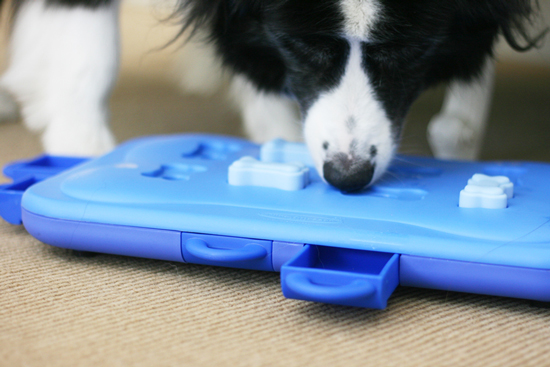 15 Indoor Activities for Dogs and Rainy Day Games that your pup will love. Easy to do, and fun for dogs of all shapes and sizes!