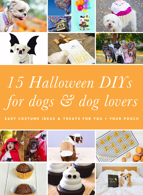15 easy DIY Halloween dog costumes and fun recipes + projects for dog lovers - including full tutorials and photos for the perfect Halloween!