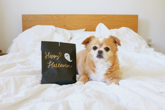 15 easy DIY Halloween dog costumes and fun projects for dog lovers - including full tutorials and photos for the perfect Halloween!