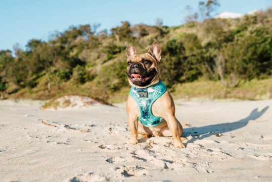 Quality, on trend collars, bow ties, leads, and reversible harnesses for big AND little dogs - sizing from Small to Extra Large. For fun, fashionable pups!