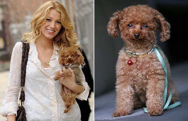 Blake Lively & Penny | Pretty Fluffy