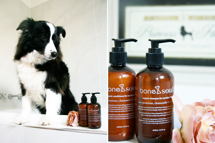 Bone & Soul Pet Grooming Review | Pretty Fluffy