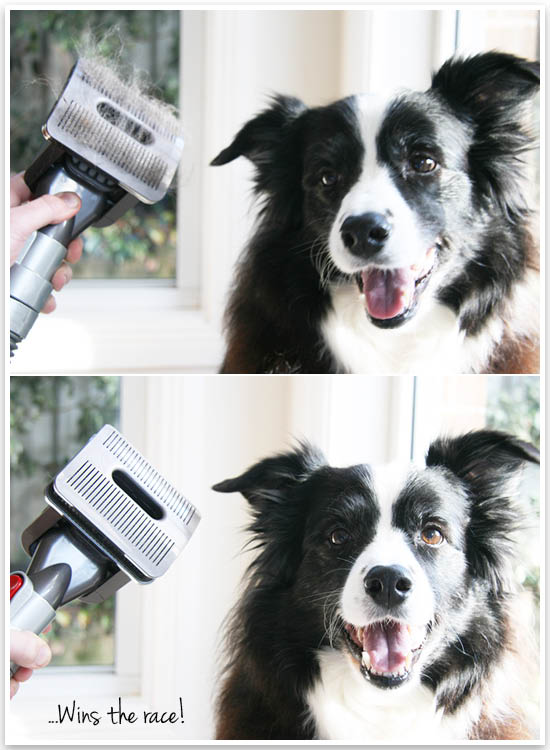 Bye bye pet hair! A full review or the Dyson Groom tool for pets - and a step by step guide on how to use it (even with dogs scared of the vacuum!)