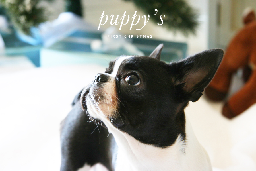 Puppy's First Christmas | Pretty Fluffy