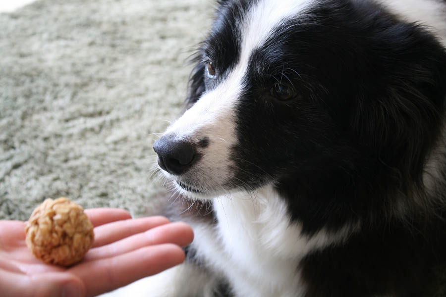 No bake dog treats | Pretty Fluffy