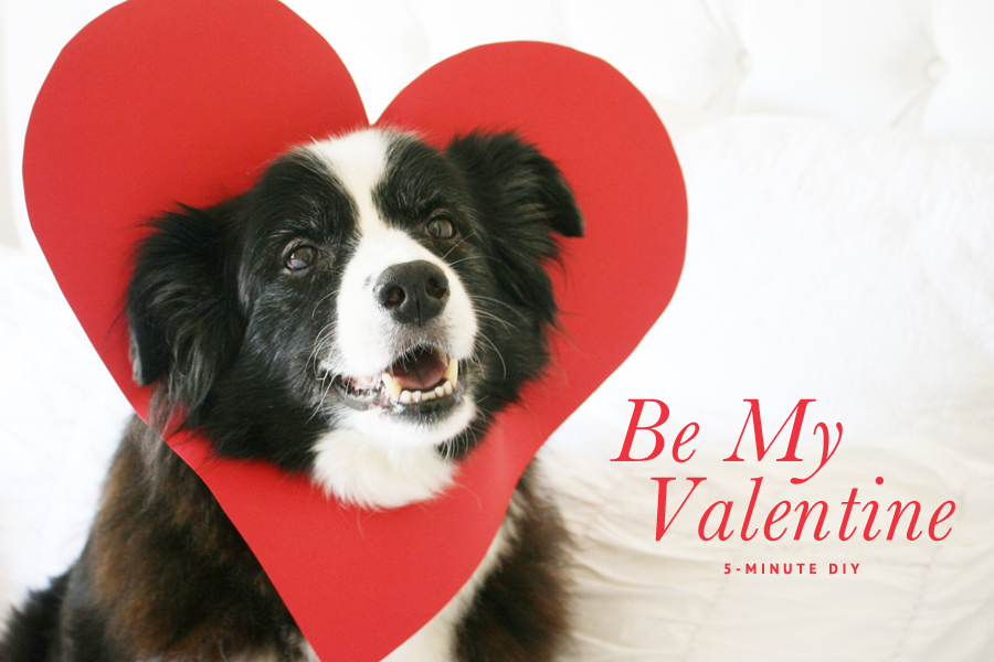 Simple Valentine Bow Adorable Dog - 5-Minute-Valentine-_-Pretty-Fluffy  Image_914076  .jpg